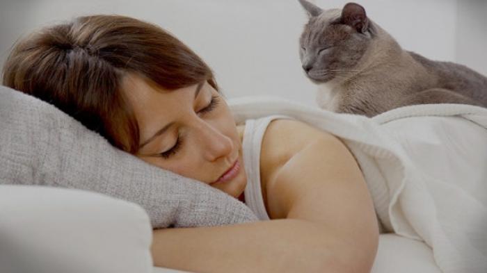 5 Bahaya Bulu Kucing bagi Wanita dan Kesehatan Tubuh